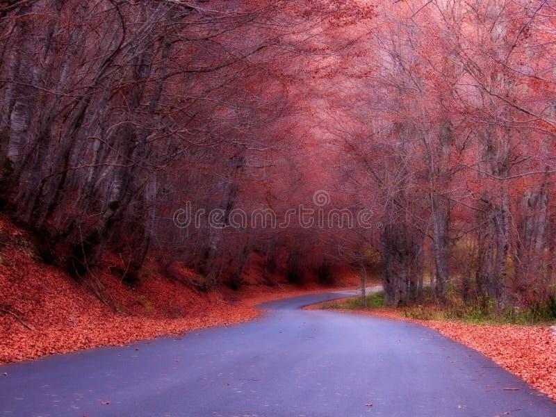 Un camino en las maderas imagen de archivo