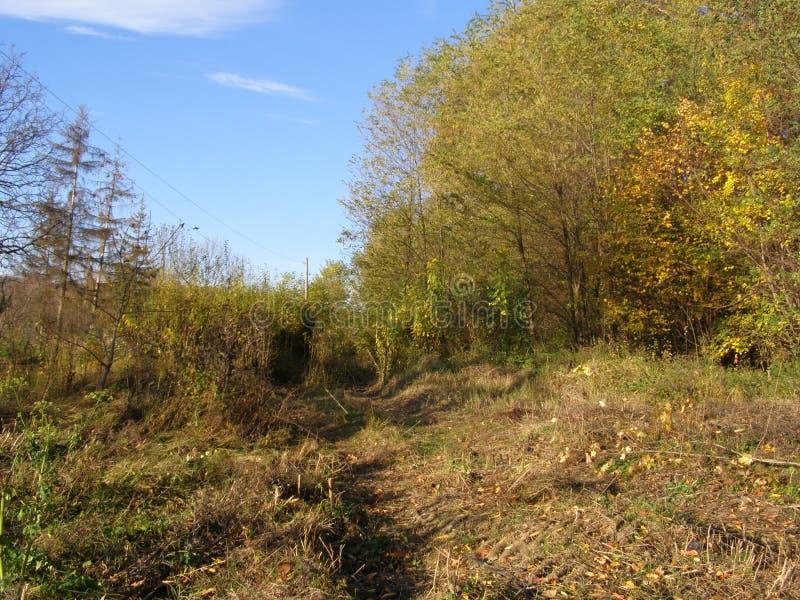 Un camino forestal hermoso fotografía de archivo libre de regalías