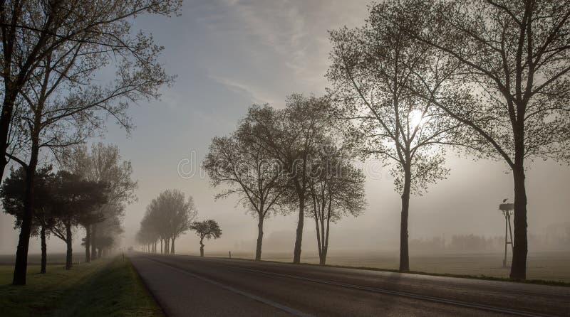 Un camino moning temprano en primavera foto de archivo