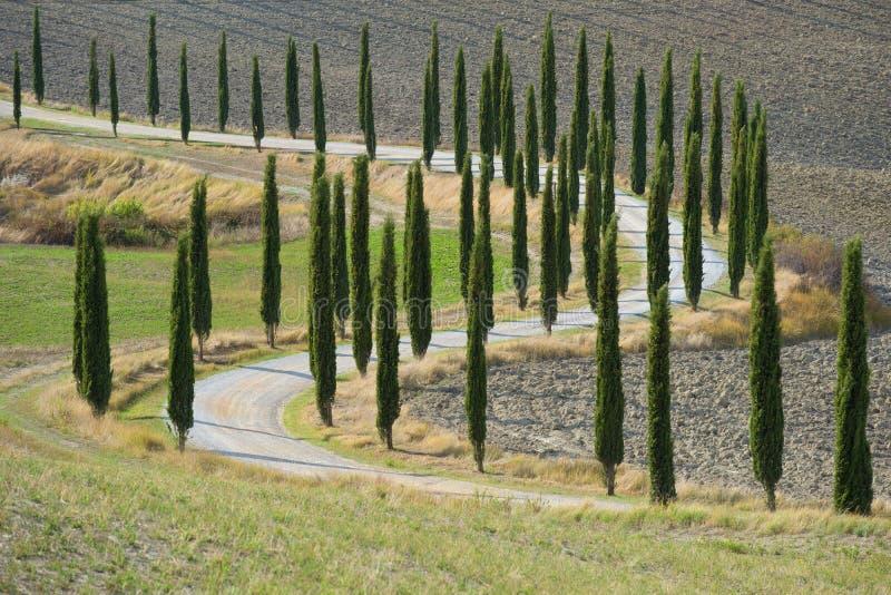 Un camino rural de la bobina con los cipreses a lo largo de un campo arado Toscana, Italia fotos de archivo libres de regalías