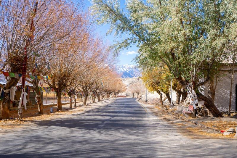 Un camino y el colorido de árboles al lado del camino en la estación del otoño en leh, Ladakh fotos de archivo