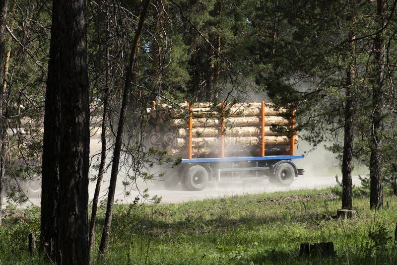 Un camion avec une remorque dans la forêt transporte les arbres coupés Grand transport chargé avec le pin photographie stock