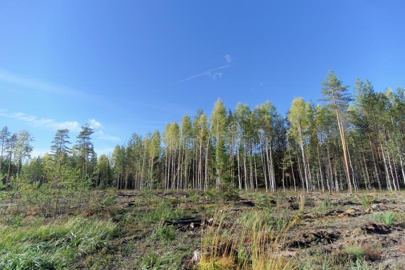 Un campo con erba che ha cominciato ingiallire e legno immagine stock libera da diritti