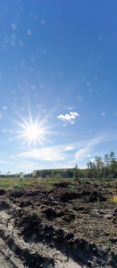 Un campo con erba che ha cominciato ingiallire e legno Sun luminoso nel telaio glare immagine stock