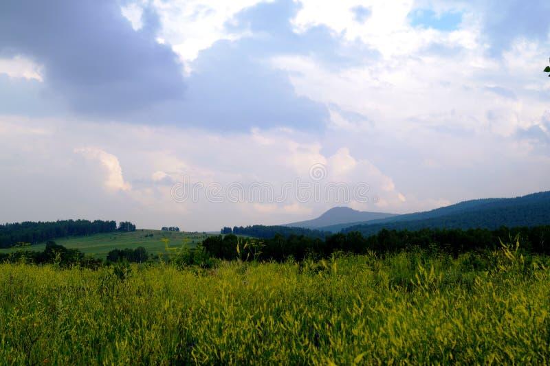 Un campo con i fiori gialli sotto un cielo pesante fotografia stock
