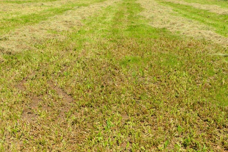 Un campo con la hierba recientemente cortada imagen de archivo libre de regalías
