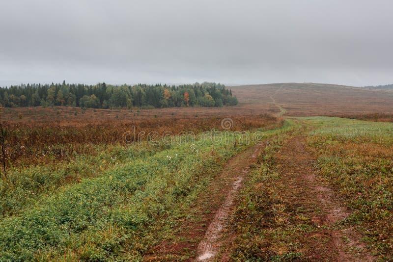 Un campo con la hierba verde, el camino que va más allá del horizonte en una colina, un bosque con los árboles de hojas caducas c imagen de archivo libre de regalías