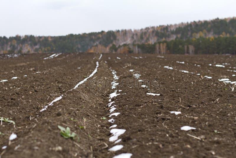 Un campo con suolo fertile coperto di prima neve e di piante verdi per lavoro agricolo su un fondo scenico autunnale della forest immagini stock libere da diritti