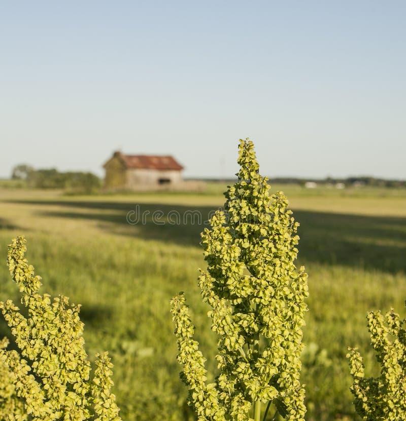 Un campo con un granaio fotografie stock libere da diritti