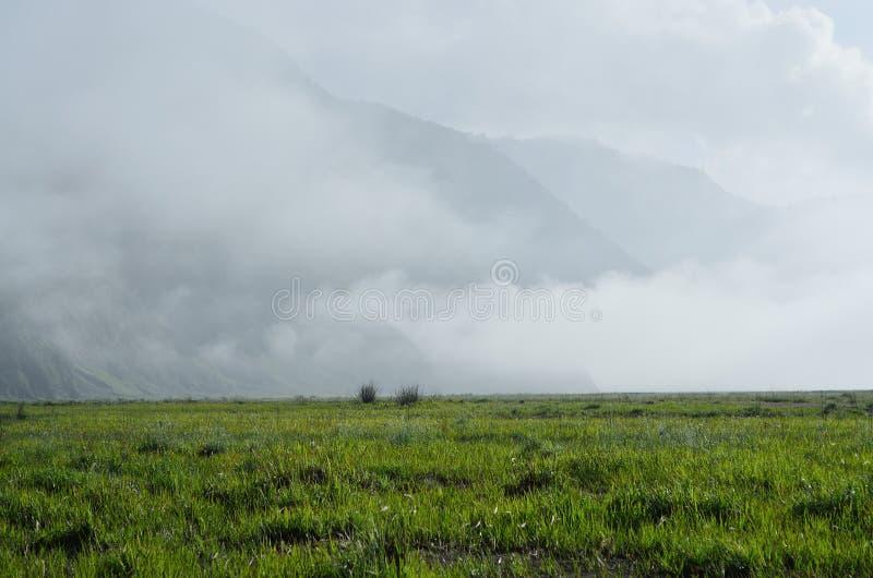 Un campo con una niebla fotografía de archivo libre de regalías