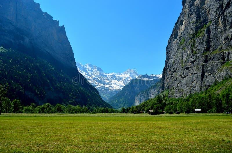 Un campo de flores debajo de las montañas suizas imagen de archivo