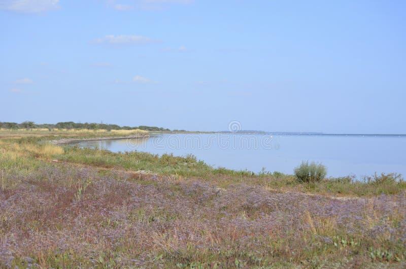 Un campo de las flores florecidas del puurpur por el mar imagen de archivo