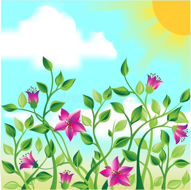 Un campo dei fiori fotografie stock