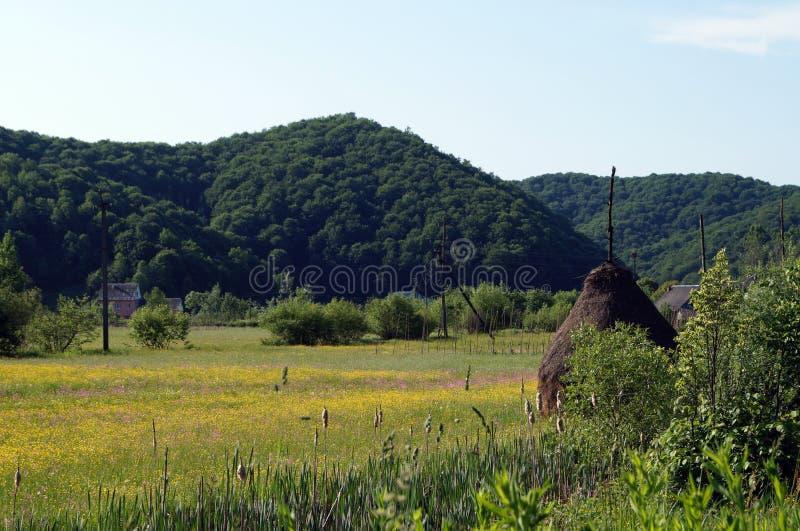 Un campo dei fiori gialli vicino alle montagne immagine stock libera da diritti
