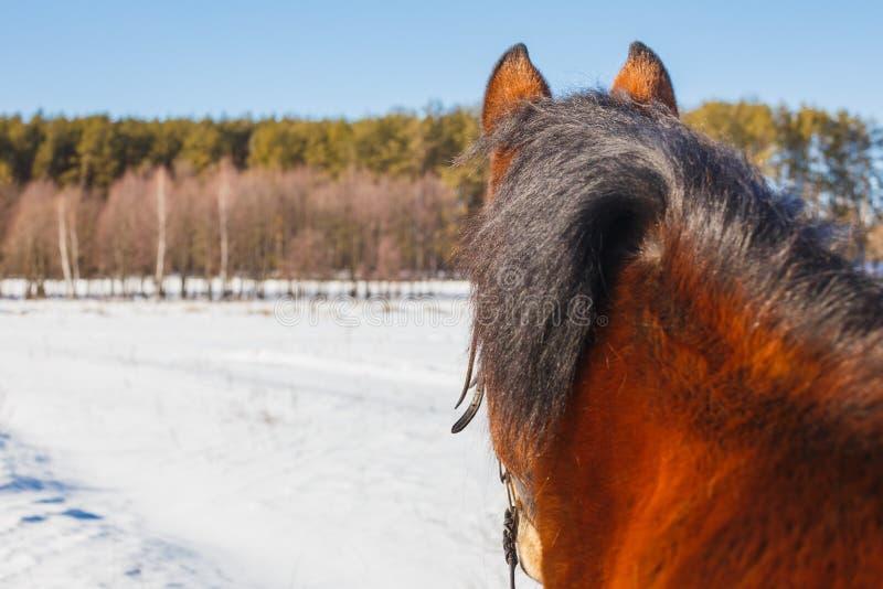 Un campo del caballo se coloca con su parte posterior y miradas hacia el bosque fotografía de archivo libre de regalías