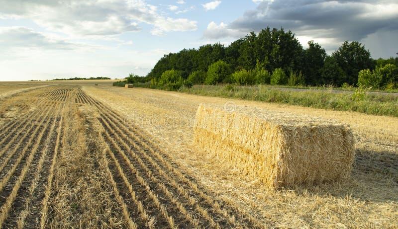 Un campo di Haystack campi coltivati e campi di frumento fotografia stock