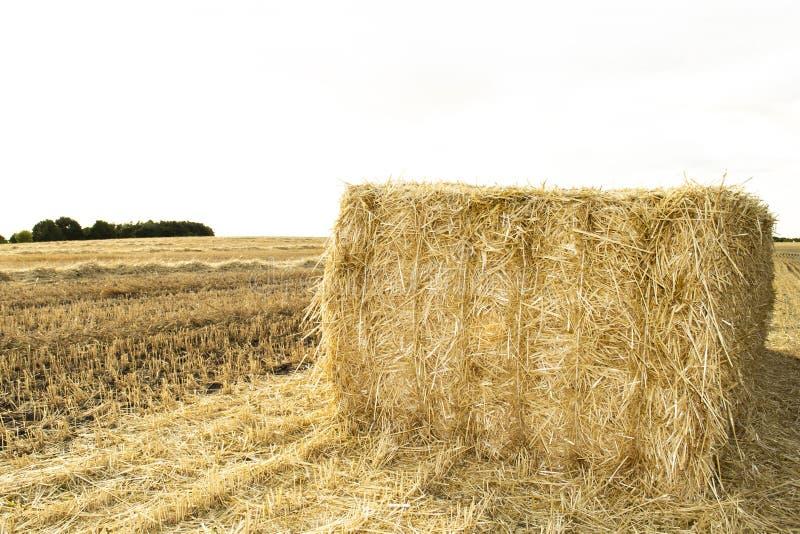 Un campo di Haystack campi coltivati e campi di frumento fotografia stock libera da diritti