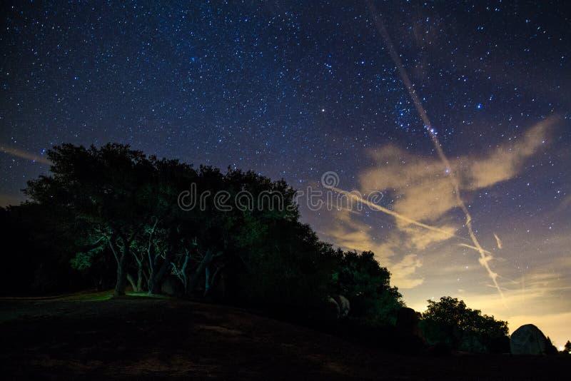 Un campo e un gruppo acceso di alberi alla notte fotografia stock libera da diritti