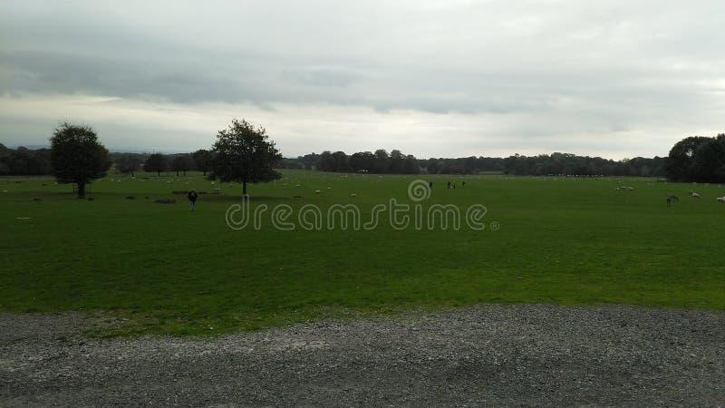 Un campo en el parque de Tatton con los árboles fotografía de archivo libre de regalías