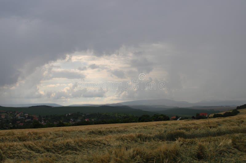 Un campo en verano foto de archivo