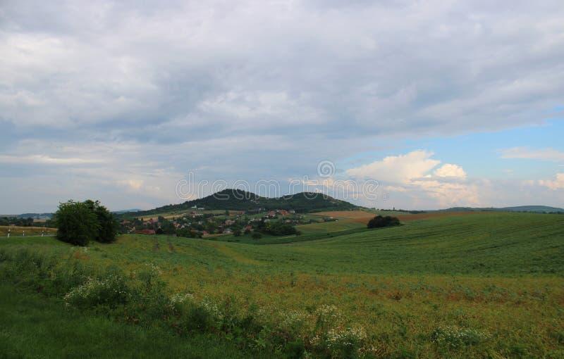 Un campo en verano imagen de archivo