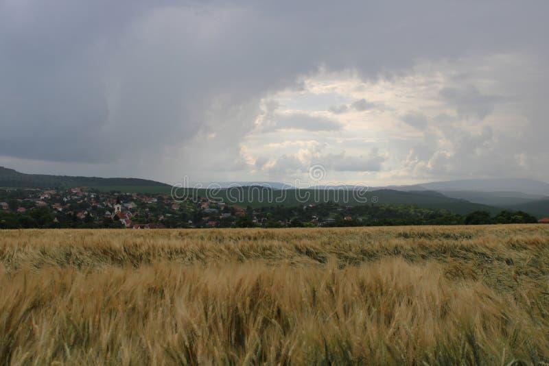 Un campo en verano fotos de archivo