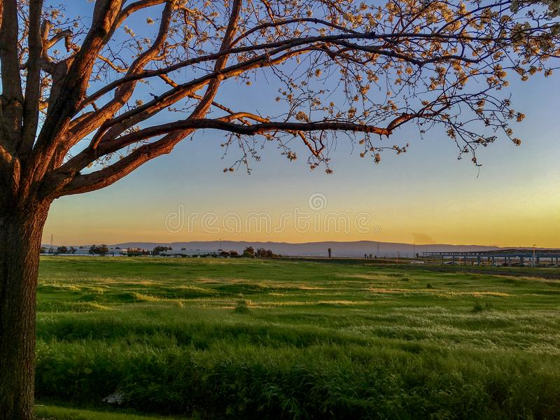 Un campo erboso al tramonto in California fotografia stock