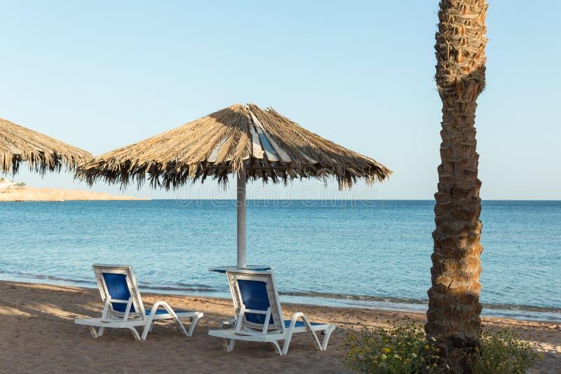Un canapé du soleil sous un parapluie plage sablonneuse avec des palmiers avec une pergola en métal et des canapés en plastique d photographie stock libre de droits