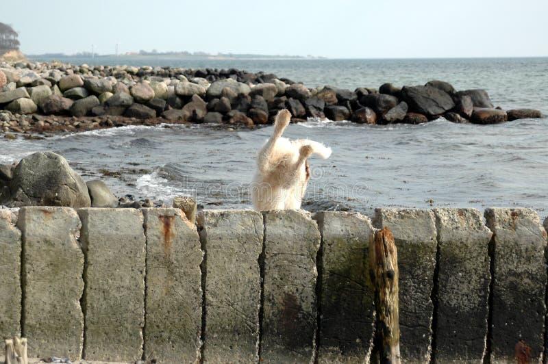 Un cane bianco ha saltato ma non sembra avere un buon atterraggio immagine stock libera da diritti