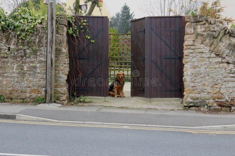 Un cane che aspetta pazientemente ai portoni immagini stock libere da diritti