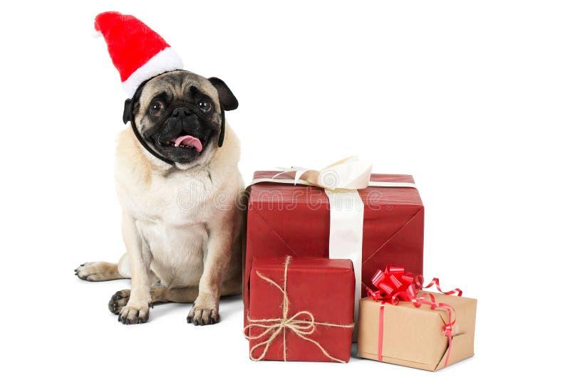 Un cane del carlino, vestito in cappello di Santa, si siede accanto ai contenitori di regalo imballati Isolato su priorità bassa  fotografia stock