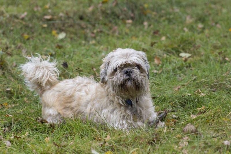 Un cane in erba fotografie stock