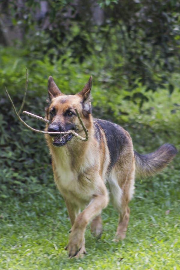 Un cane felice che viene dalle piante fotografia stock libera da diritti