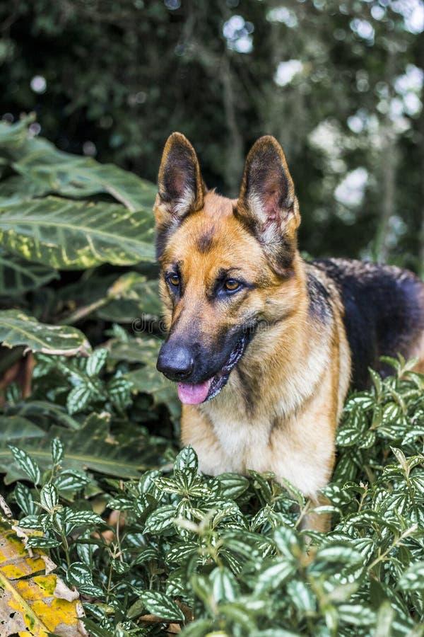 Un cane felice che viene dalle piante fotografia stock