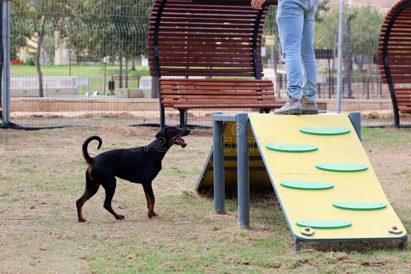 Un cane gioca nelle facilità nel parco del cane fotografie stock libere da diritti