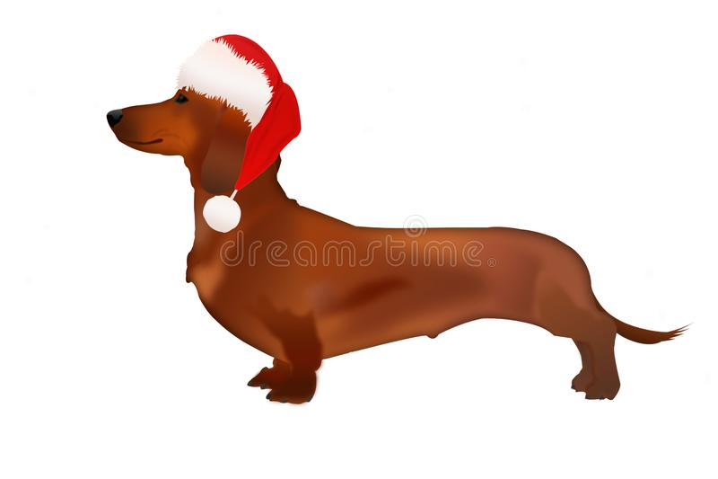 Un cane isolato del bassotto tedesco in cappello di Santa Claus su fondo bianco illustrazione vettoriale
