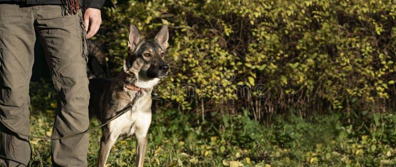 Un cane leale protegge il proprietario Il tallone di comando immagini stock libere da diritti