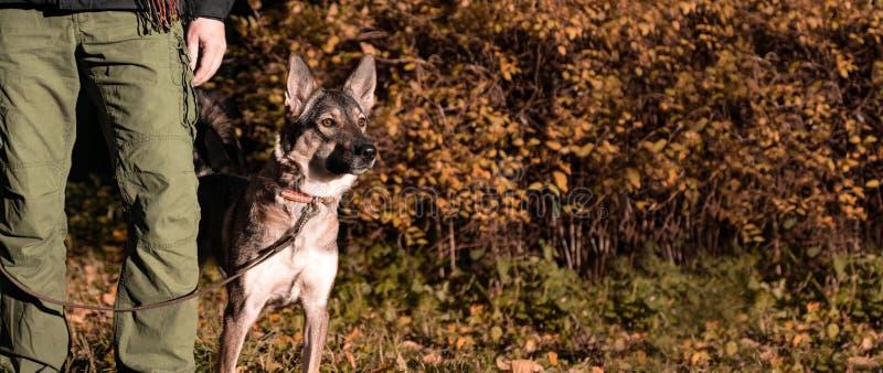 Un cane leale protegge il proprietario Il tallone di comando fotografie stock libere da diritti
