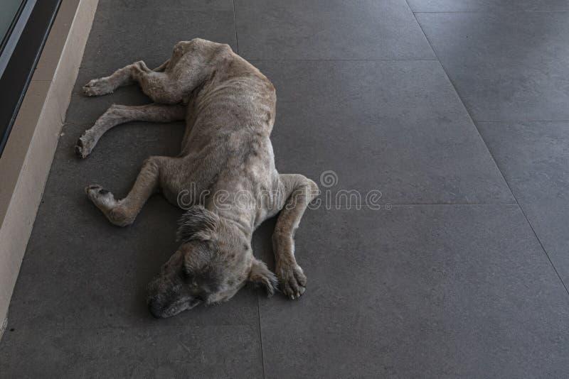 Un cane solo sporco del vagabondo si riposa sul pavimento fotografia stock