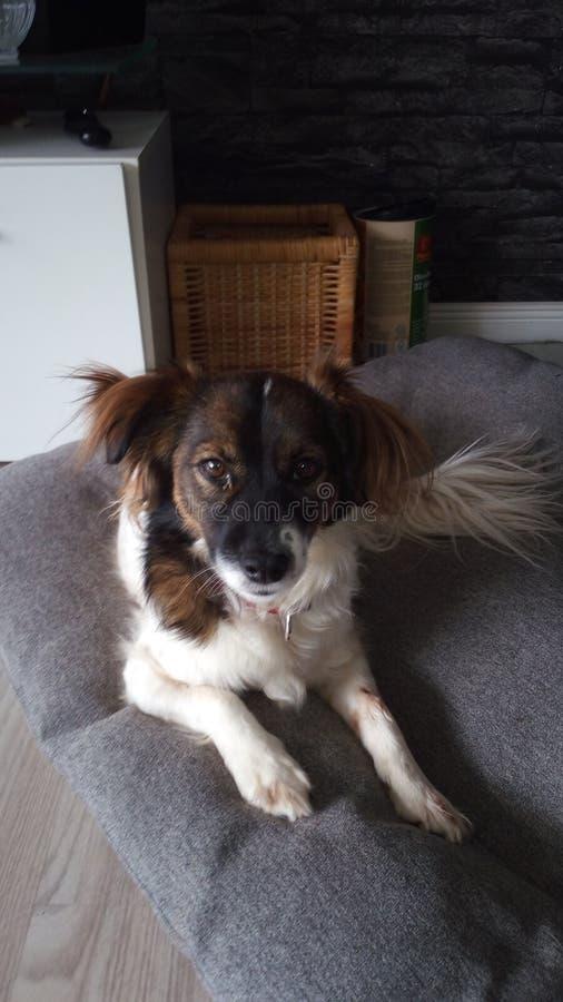 Un Cane Carino fotografia stock libera da diritti