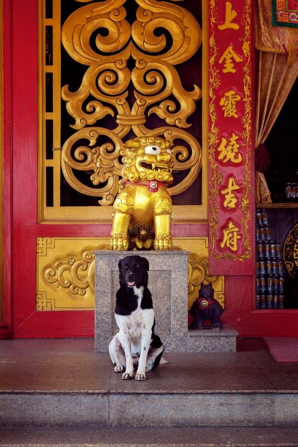 Un cane in un tempio cinese fotografia stock