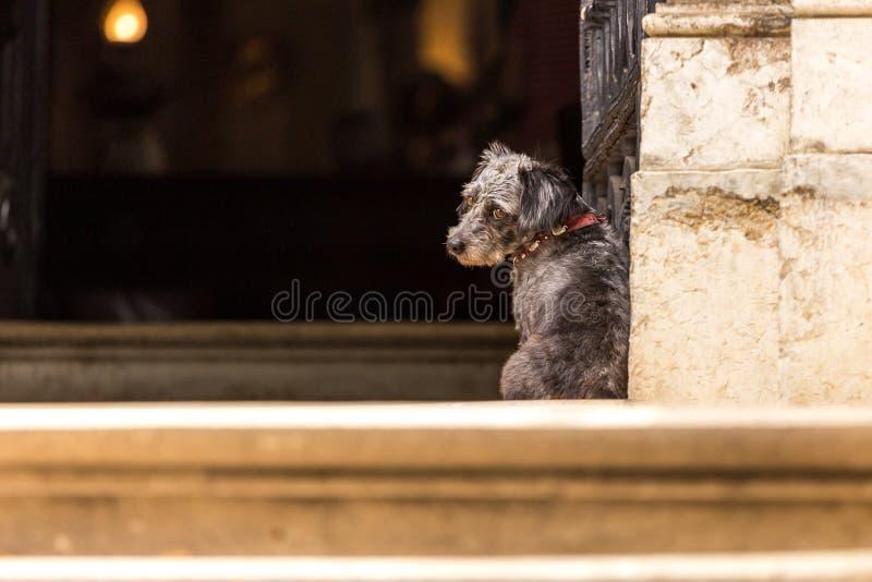 Un cane triste sta aspettando il proprietario fotografia stock libera da diritti