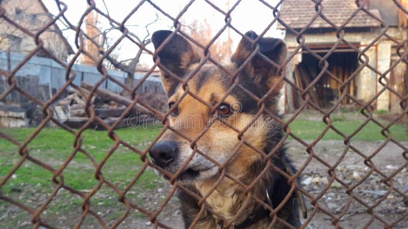 Un cane in una gabbia immagine stock