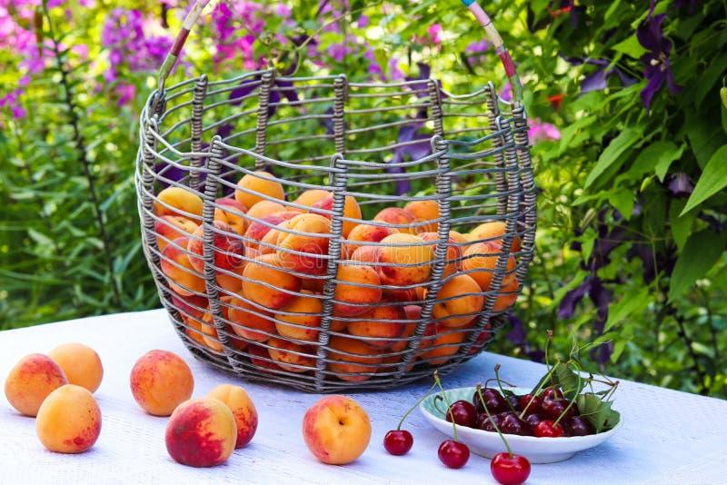 Un canestro delle albicocche è situato su una tavola nel giardino su un fondo dei fiori immagini stock