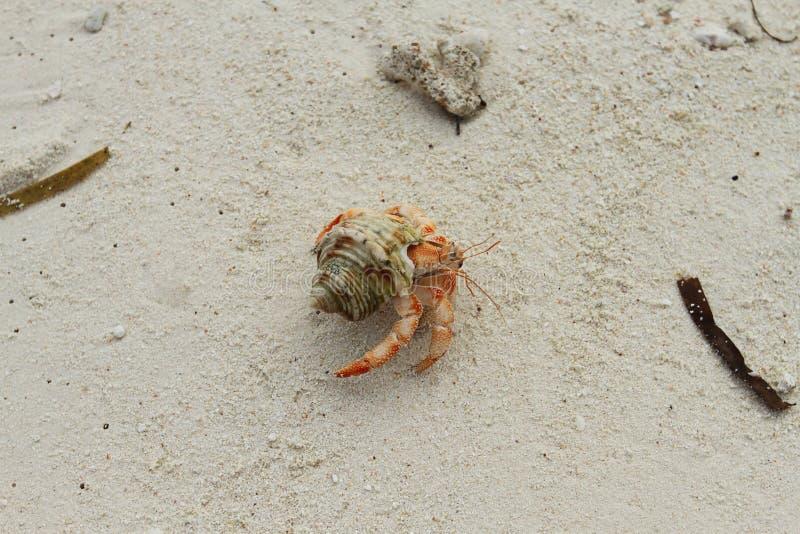 Un cangrejo de ermitaño en las arenas en la isla tropical foto de archivo