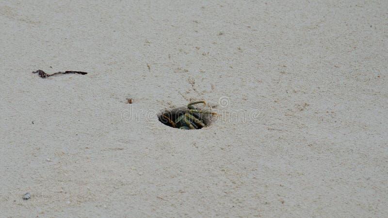 Un cangrejo de ocultación Zanzíbar, Tanzania febrero de 2019 imagen de archivo
