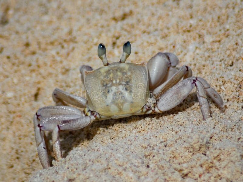 Un cangrejo en la playa foto de archivo libre de regalías