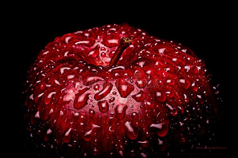 Un capítulo que llena imagen macra de una manzana roja vibrante cubierta en los descensos del agua que gotean en la cáscara Esto  foto de archivo libre de regalías