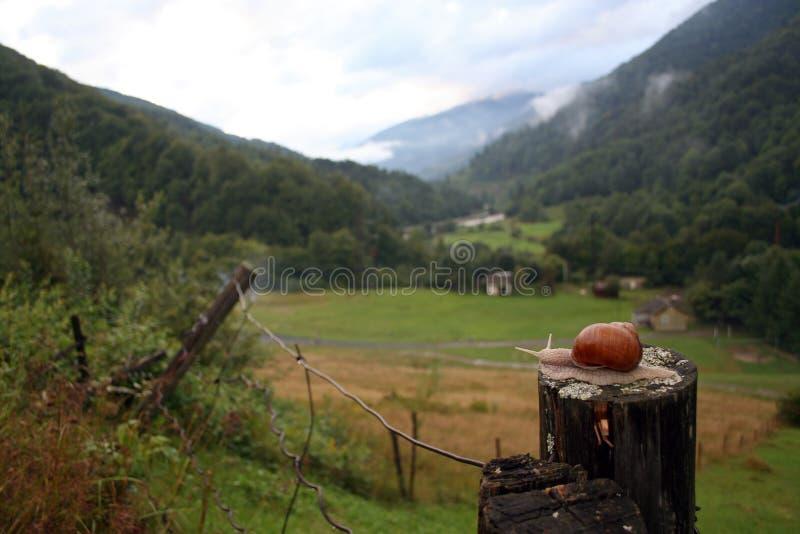 Un caracol grande está en el tocón de madera, paisaje admirable de los Cárpatos está en el fondo imagen de archivo libre de regalías