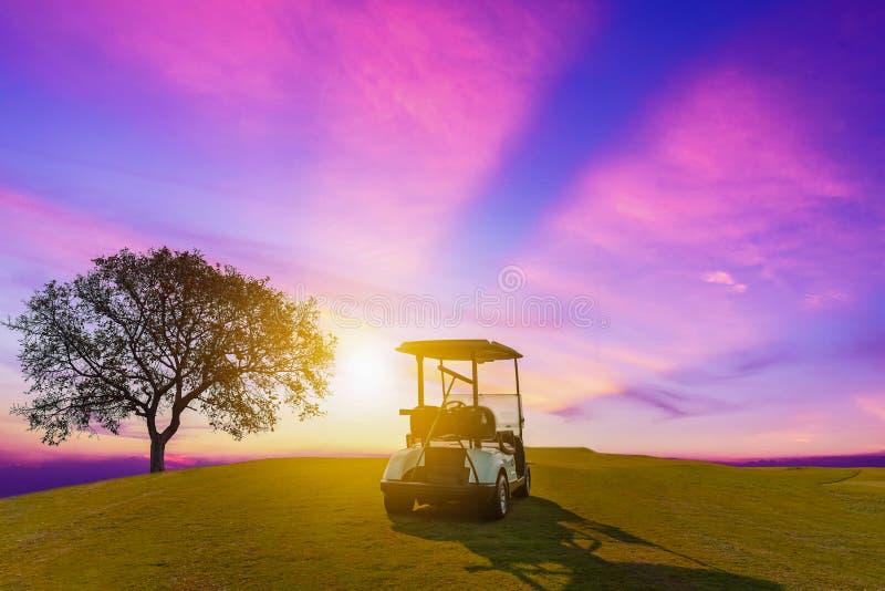 Un carretto di golf che parcheggia sull'erba verde al campo da golf con il grande albero immagine stock libera da diritti
